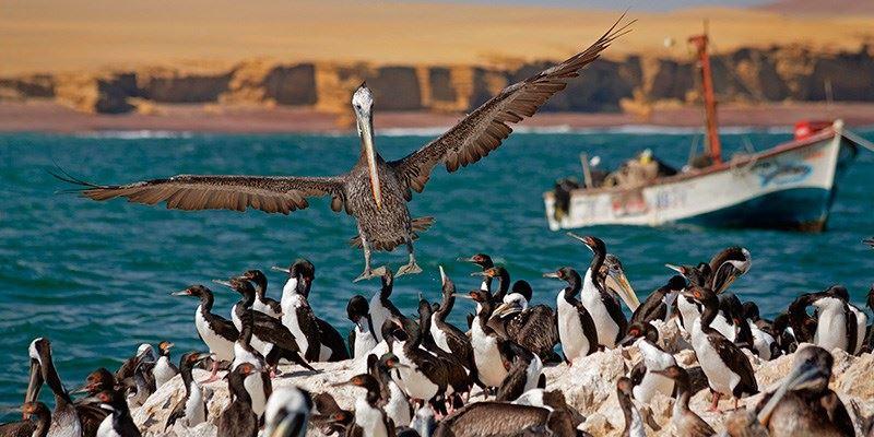 Ballestas Island Tour